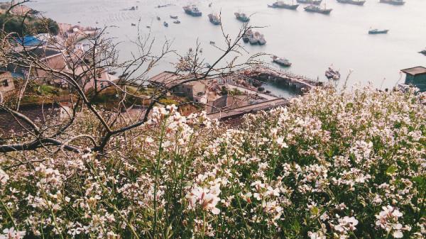 枸杞岛图片